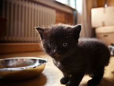 Zehn schwarze Katzenbabys zum Verlieben - Seite 3