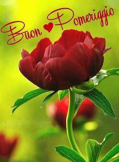 Buon Vespro Frasi Buon Vespro Immagini ,  #buon #frasi #immagini #vespro Good Night I Love You, Good Morning Good Night, Italian Memes, Good Afternoon, Decir No, Spanish, Flowers, Plants, Tea Time