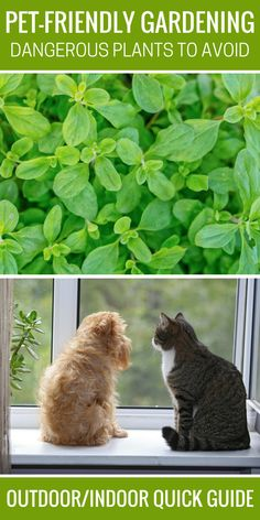 If you love gardening and have pets, then it's important to know what plant can be harmful to you furbaby's so you can avoid them. This list will be helpful to all gardening pet owners, plus a link to the most comprehensive safe plant list available. Check it out!