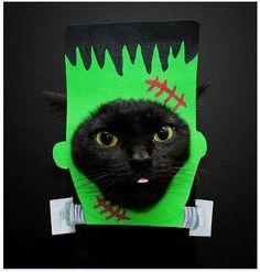 Frankenkitteh - adorable black cat