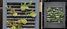 Window shutter vertical garden
