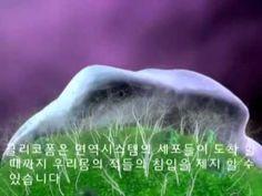 시그널레시친 글리코영양소 완벽 이해 동영상