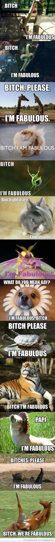 B*itch I'm Fabulous... Animal Edition