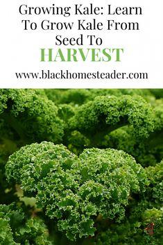 109 Best Black Gardeners Farmers Images Soil Improvement Art