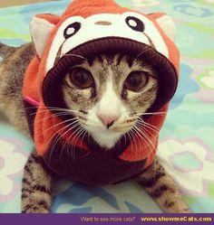 Cat in the hood - www.showmecats.com #showmecats #thefashionista