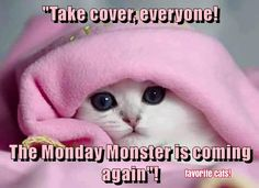"""If that's what Monday looked like, that'd be OK by me ;)  Can  you hide me, kitteh?  I iz as afeared of the monday monster as you are!""""   Oh, the horror!"""