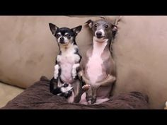 ▶ How to Mildly Annoy Your Dogs Part 2 - YouTube