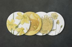Botanical Coaster Set - Botanical Illustration, Botanical Print, Vintage Illustration, Flower Coaster, Plant Coaster, Gardening Coaster