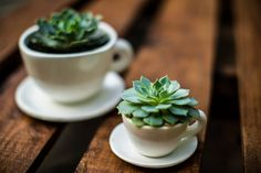 Xícaras | Wedding favor suculent get different tea cups from Salvation Army would be super cute!
