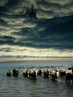 Stormy Skies over Senegal, Africa | by Christian Bachellier, via Flickr