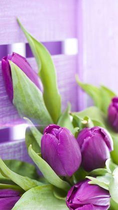 Purple Tulips Live Wallpaper for Android - APK Download Wallpaper 2016, More Wallpaper, Wallpaper Downloads, Flowers Roses Bouquet, Red Roses, Plant Fungus, Cute App, Cute Couple Art, Purple Tulips