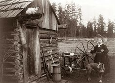 An old homestead on a farm in Washington state, 1908. Notice the cat up on the beam of the log cabin. The guns, butter churn and spinning wheel reminds us of the self sufficient lifestyle of the first part of the last century.