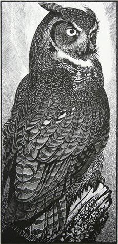 Colin See-Paynton. Great Horned Owl. (wood engraving)