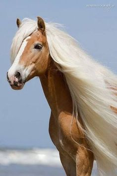 20 Horses With The Most Fabulous Hair You Have Ever Seen - ♥ cute animals ♥ - Pferde Cute Funny Animals, Cute Baby Animals, Animals And Pets, Wild Animals, Most Beautiful Horses, All The Pretty Horses, Beautiful Beautiful, Absolutely Gorgeous, Cute Horses