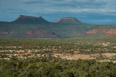 Protect Native Lands and Public Health By Defending Bears Ears National Monument http://www.onegreenplanet.org/news/defend-bears-ears-monument/?utm_campaign=crowdfire&utm_content=crowdfire&utm_medium=social&utm_source=pinterest