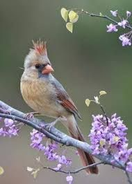 """Képtalálat a következőre: """"aves hermosas del mundo volando"""""""