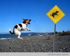 Dog Jumping..