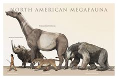 North American Megafauna