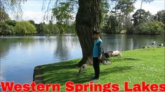 Auckland Travel Guide, Western Springs Lakeside Park