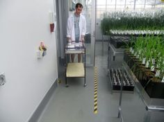 Ben Niehaus (Lemnatec staff) collecting plants for test runs with the completed Scanalyzer 3D Phenotyping System