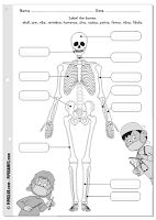 Skeletal System Model cut outs for children, kids