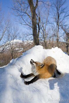 http://fox-info.net/