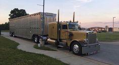 Peterbilt custom 379 bull hauler Big Rig Trucks, Tow Truck, Semi Trucks, Cool Trucks, Peterbilt 359, Peterbilt Trucks, Logging Equipment, Heavy Construction Equipment, Trailers