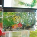 American Miniaturist - create fish tanks - downloadable free tutorial pdf