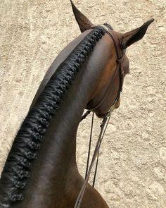 Equestrian Chic, Equestrian Outfits, Equestrian Fashion, Cute Horses, Pretty Horses, Beautiful Horses, Horse Mane Braids, Horse Hair Braiding, Horse Grooming