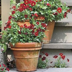 Stair-Step Violas | 'Penny Red with Blotch' violas will warm any entry. Group them on your steps to add a vertical boost. | SouthernLiving.com
