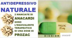Gli Anacardi sono un Potente Antidepressivo Naturale Due manciate di anacardi sono l'equivalente terapeutico di una dose di Prozac. All'interno del tuo organismo, l'aminoacido essenziale L-triptofano, è composto dalla niacina in grado di ridurre l'ansia e indurre la sonnolenza. La cosa più importante è che il triptofano è il precursore della serotonina, uno dei più importanti neurotrasmettitori del nostro corpo.