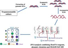 Identification of Trypanosomatids by detecting Single Nucleotide Fingerprints using DNA analysis by dynamic chemistry with MALDI-ToF