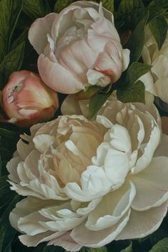 Mia Tarney: Peonies, oil on linen