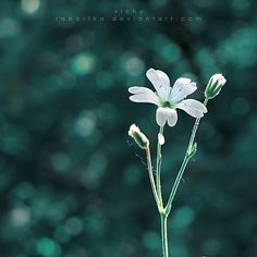 Dreaming  by ~RaBBiTKa  Photography / Animals, Plants & Nature / Flowers, Trees & Plants