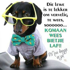 Good Morning Wishes, Day Wishes, Lekker Dag, Afrikaanse Quotes, Goeie More, Morning Quotes, Favorite Quotes, Cute Pictures, Style
