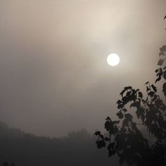 """【sincerely_orange】さんのInstagramをピンしています。 《""""Light silken curtain, colorless and soft, Dreamlike before me floating! what abides Behind thy pearly veil's Opaque, mysterious woof?"""" -- Emma Lazarus • • • • • • • • #fog #sunrise #sun #landscape #photography #forest #woods #sky #beauty #poem #emmalazarus #dream #dreamlike #mood #grey #gray #colorless #veil #opaque #mysterious #noedit #nofilter #写真 #霧 #森 #日の出 #朝日 #太陽 #木 #きれいい》"""