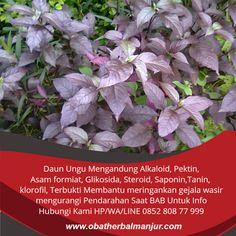 Tawk to obat wasir di apotik Wordpress Org, Plants, Garden, Faces, Garten, Planters, Gardening, Outdoor, Home Landscaping