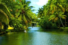 The Picturesque Backwaters of Kerala