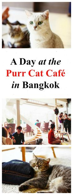 A visit to the Purr Cat Café in Bangkok (20+ photos) - Bangkok cafe, what to do in Bangkok, Bangkok cafe interior, purring cats, Bangkok activities, Bangkok things to do, Bangkok coffee shop, eat, drink, restaurant, coffee, unique)