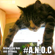 Repin if your #cat falls asleep in funny places! #JoyofPets