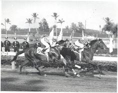 1958 Florida Derby winner Tim Tam Horse Galloping, Thoroughbred Horse, All The Pretty Horses, Beautiful Horses, Calumet Farm, King Horse, The Great Race, Horse Racing, Race Horses