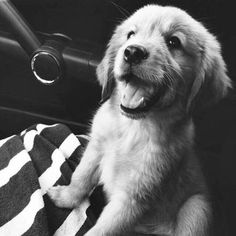 cutest little thing!