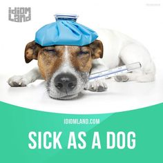 "Cool ""Sick as a dog"" means ""very sick"". Example: Sally was as sick as a dog and couldn't go to the party. #idiom #idioms #say...   Teach Foreign Languages Check more at http://ukreuromedia.com/en/pin/14984/"