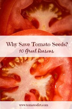 10 great reasons to save tomato seeds with Tomato Dirt #GrowTomatoes #TomatoGrowingTips