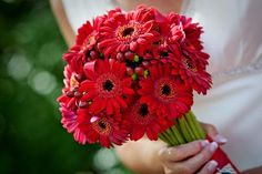 red gerber daisy bouquet