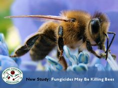 """Bee populations are dwindling across the globe, putting one in three food crops like apples and almonds, which depend on pollination from bees, at serious risk."""
