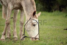 Comer detalle caballo Foto de archivo