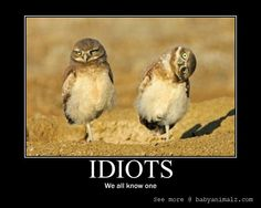 animal inspirational pictures | Motivational Posters a Fed Up Penguin and Owl wisdom | Baby Animalz