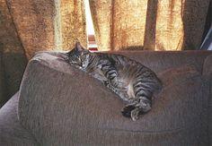 De meeste katten zijn zindelijk en doen hun behoefte gewoon in de kattenbak. Maar het gebeurt regelmatig dat jouw kat je woonka...
