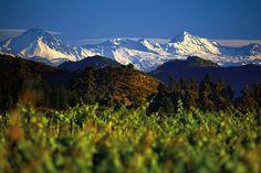WineChef - Vinho e Gastronomia em Perfeita Harmonia | As vinícolas que você não pode deixar de visitar no Chile